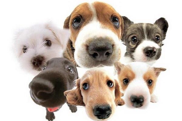 Cухой корм для собак