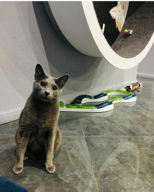 Что такое гостиница для кошек